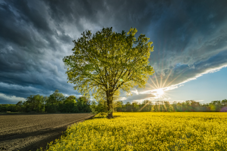 Frühling & Sommer